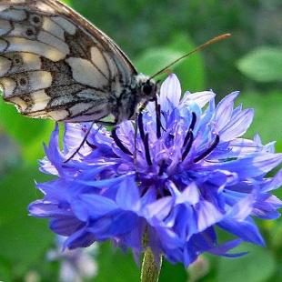 Nella Nardini Corazza, poetessa delle meraviglie del creato e di ansie esistenziali