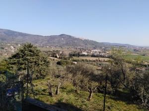 Berni - Oliveti
